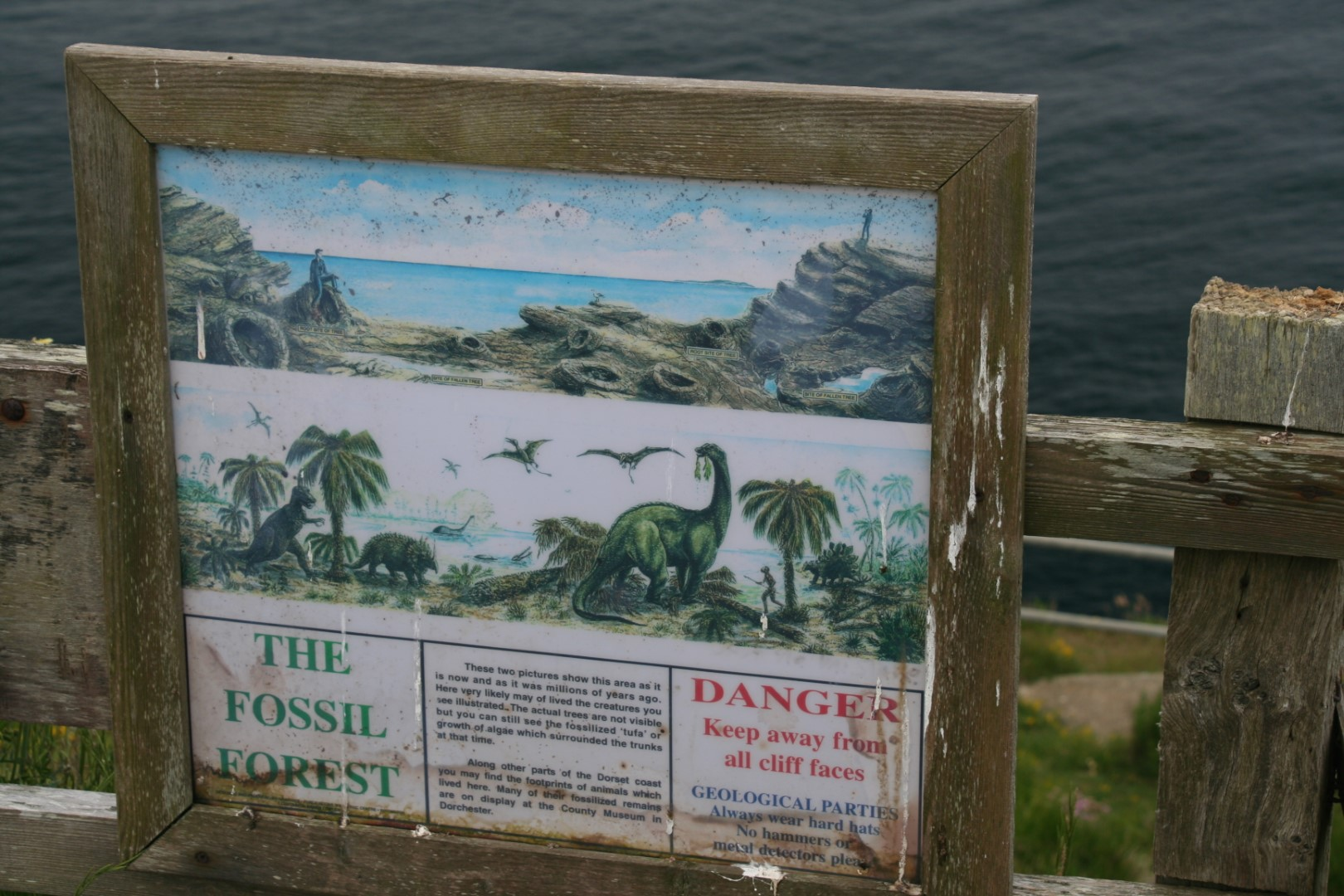Information board on fossilised trees.
